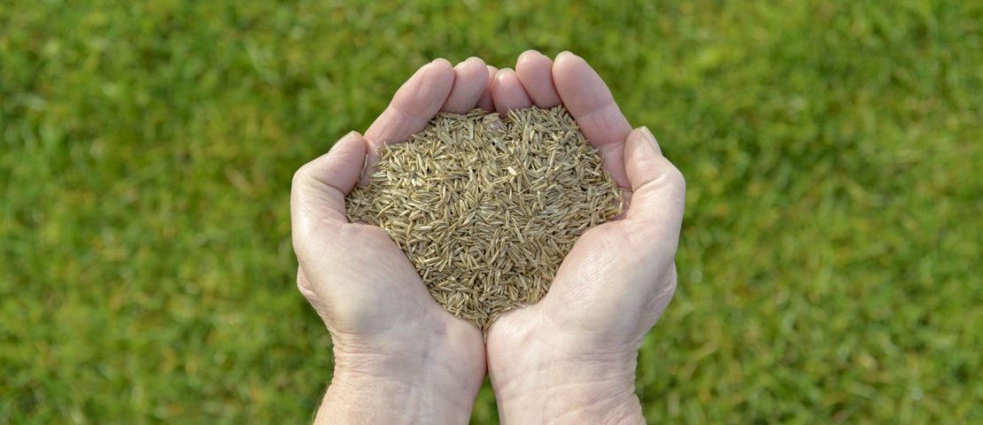 valley green and associates moorhead lawn service minnesota grass seed in hands