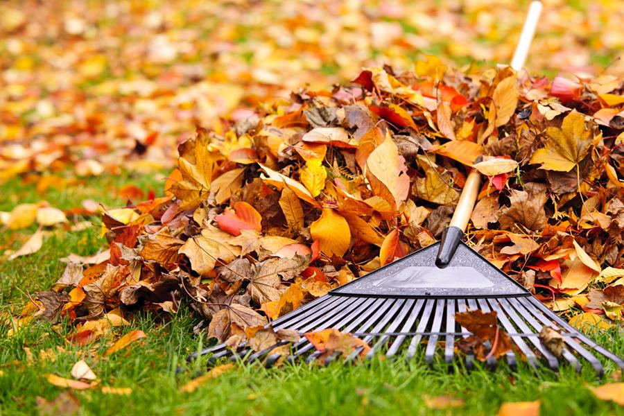 Fall leaves with rake Valley Green Associates Moorhead MN