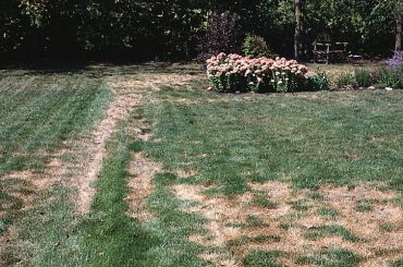 Turf damaging insects can be a real problem Valley Green and Associates can help Moorhead Minnesota