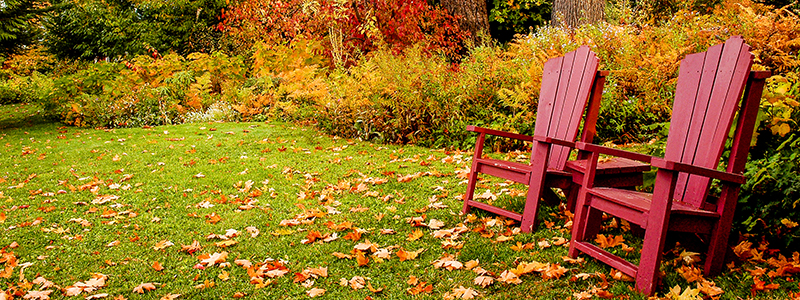 Header image of fall leaves cleanup leaf fall